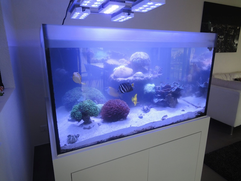 technikbecken und absch umer reinigung meerwasser aquarium blog 2014 fotos tipps und tricks. Black Bedroom Furniture Sets. Home Design Ideas