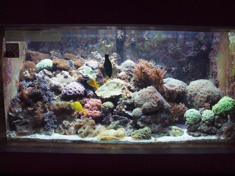 GroßZüGig 54 L Aquarium Von Juwel Hindernis Entfernen Haustierbedarf Aquarien