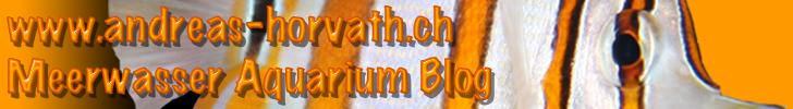 Meerwasser Aquarium Blog